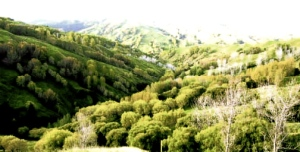 Waiau and Hikuwai Valley